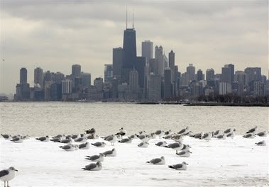 Winter chicago lake birds